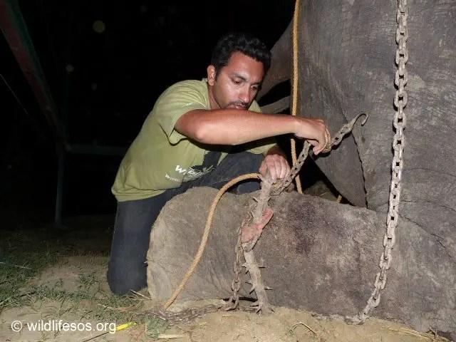 elephant gets freed