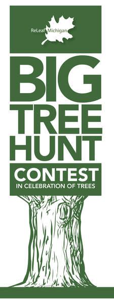 Image result for big tree hunt