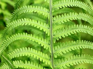 green-187949_640
