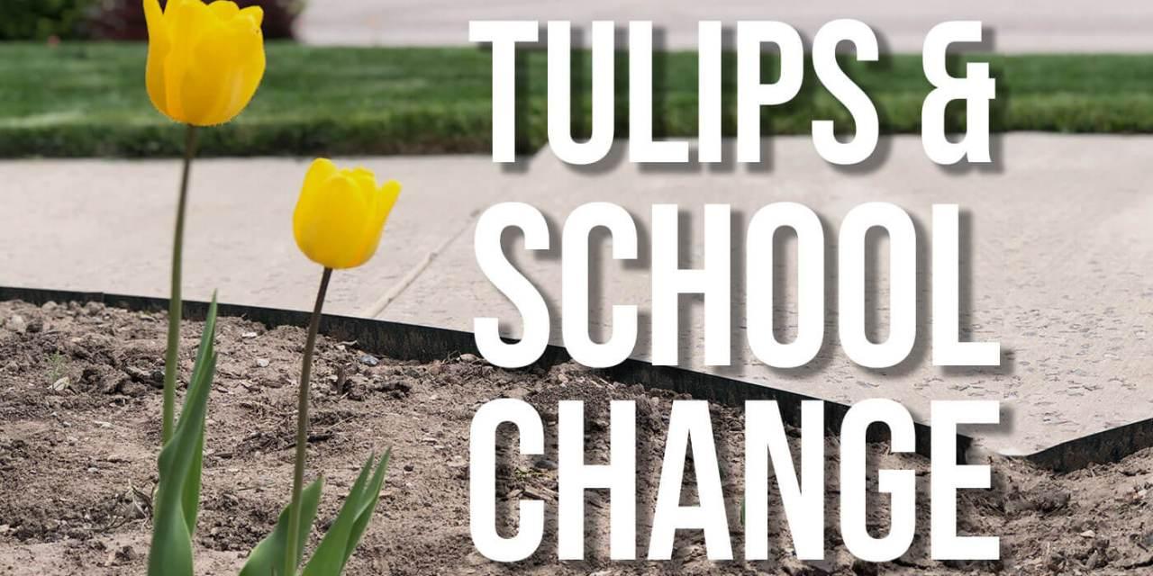Tulips & School Change
