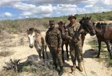 Photo of En Montecristi ERD ocupa caballos habían robado en la frontera