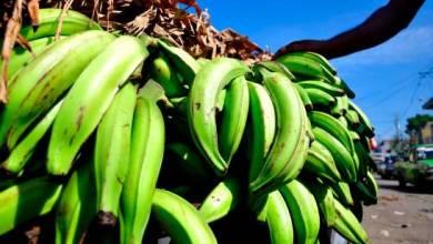 """Photo of Ministro de Agricultura explica """"por qué están caros los plátanos"""""""