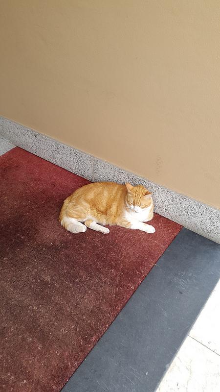Garfield (?), my new neighbor cat