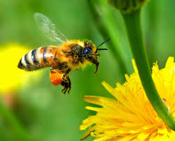 le miel et les maux de gorge