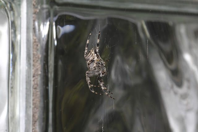 evitar-aranhas-dentro-casa-repelente Como acabar com teias de aranha em casa