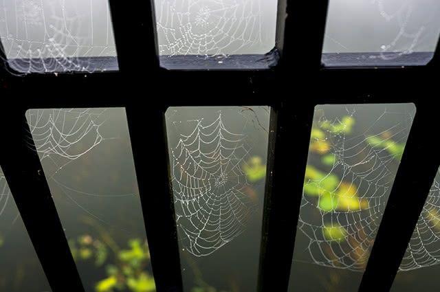teia-aranha-casa-janela Como acabar com teias de aranha em casa