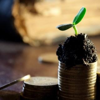 Net Worth Update - Money Tree