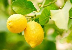 quels-sont-les-bienfaits-du-citron