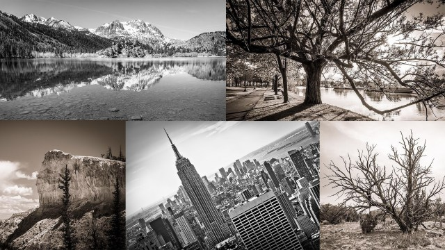What Is The Difference Between Grayscale vs Black and White vs Monochrome