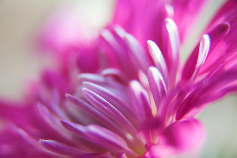 Mastering Color - The Psychology Of The Color Purple And Its Use In Photography