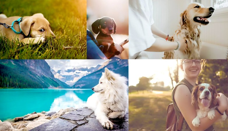 How Taking Pictures Of Pets Will Make You A Better Photographer