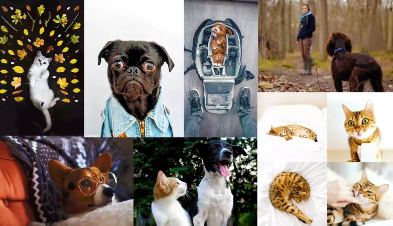 How To Get Creative With Pet Portraits