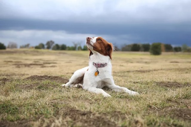 How To Make Use Of Perspective In Pet Photography