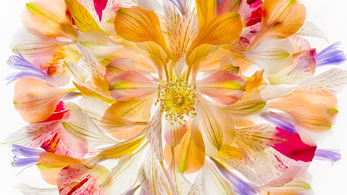 Photographing Flowers For Transparency | A Talk By Harold Davis