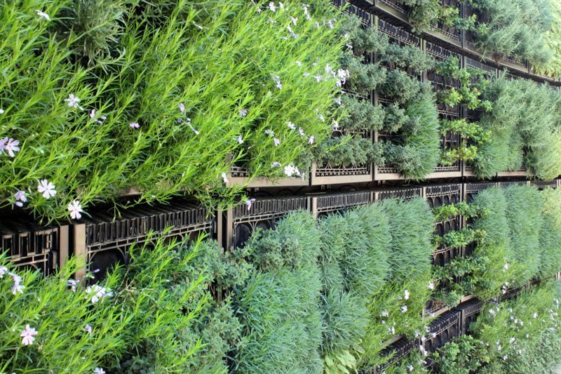 Edible Herb Wall