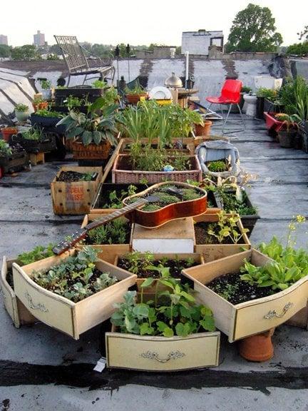 Salvaged Rooftop Garden