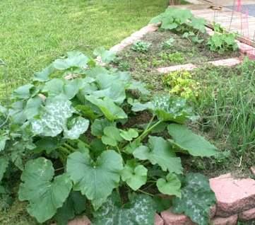 Our 2nd Texas Vegetable Garden