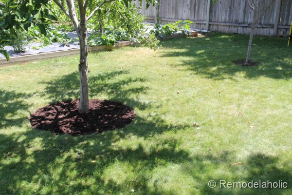 Mulch Weed Control Around Trees-10