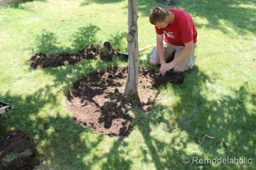 Mulch Weed Control Around Trees-4