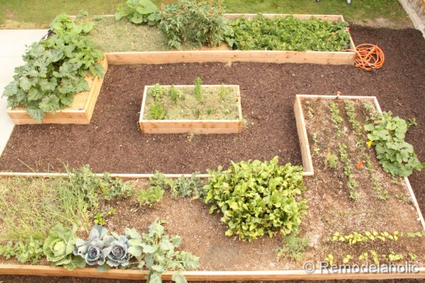 Ideas for how to set up a raised garden bed garden featured on remodelaholic.com