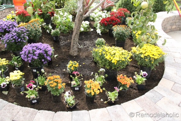 planting fall flowers-10