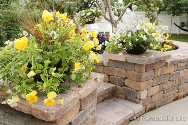 Cool Wave Pansies by stairs