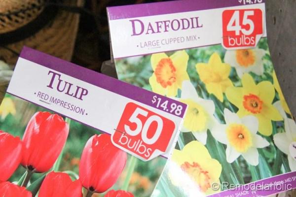 planting fall flowers-8