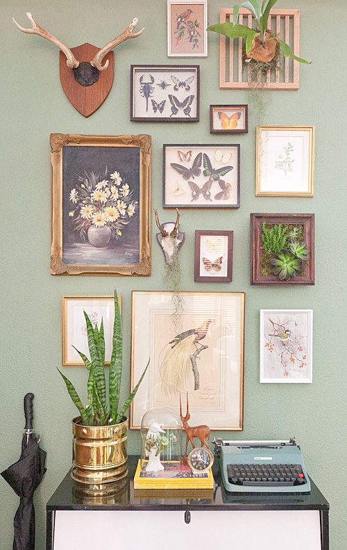 natural history gallery wall via curate this space