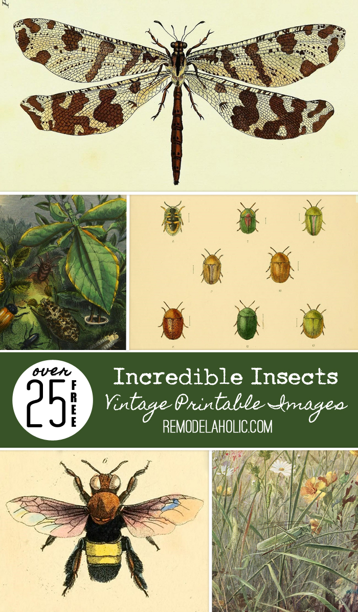 Remodelaholic | 25+ Free Incredible Insects Vintage Printable Images