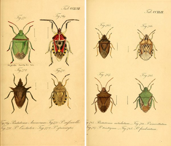 Get this and over 25 other free vintage printable insect images!