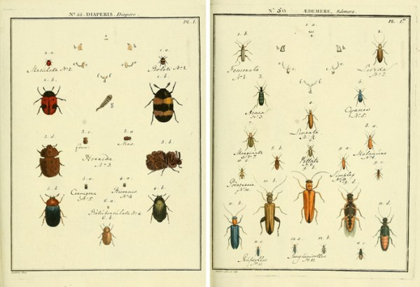 Gorgeous free vintage insect printable images!