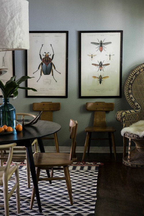 Enlarged vintage insect prints make such cool art!