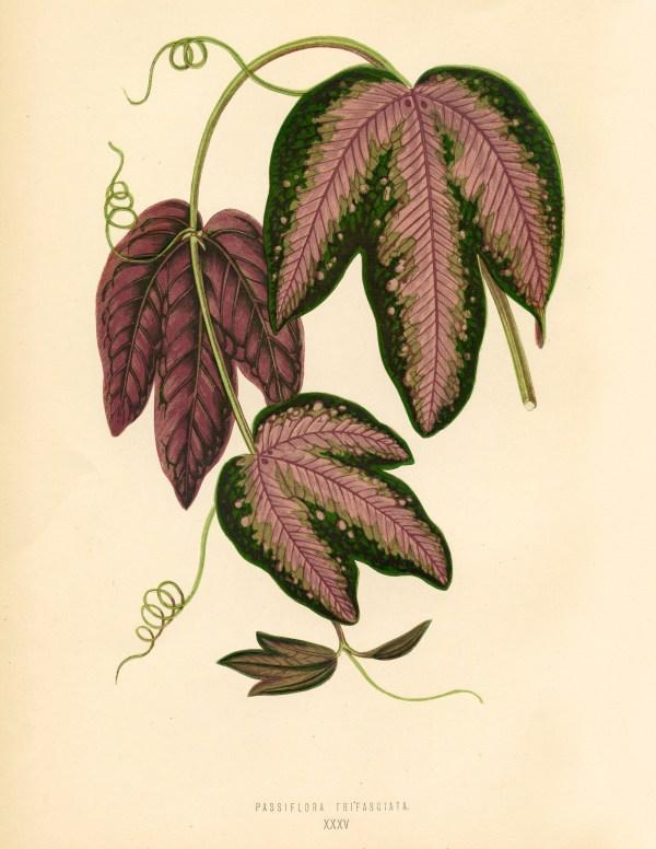 Free Vintage Leaves Image 2