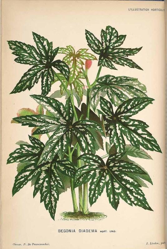 Free Vintage Leaves Image 33