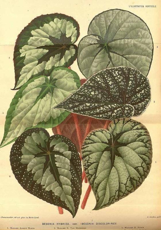 Free Vintage Leaves Image 34