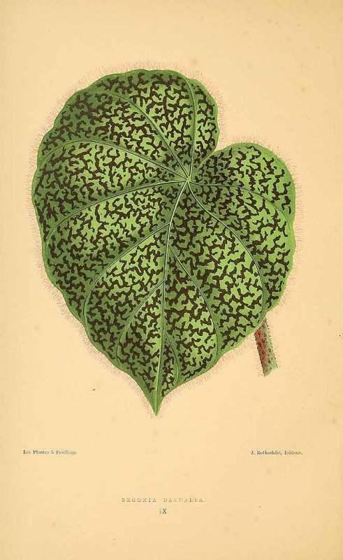 Free Vintage Leaves Image 39