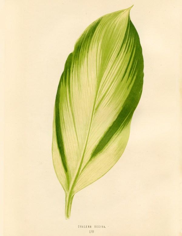 Free Vintage Leaves Image 5