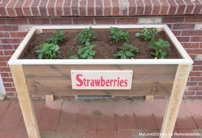 top front view of elevated strawberry planter, MyLove2Create for Remodelaholic