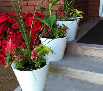 Self Watering Nimbus Pots