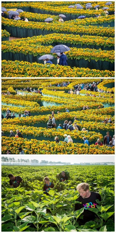 sunflower-labyrinth-at-the-entrance-of-the-van-gogh-museum-in-amsterdam-featured-on-remodelaholic