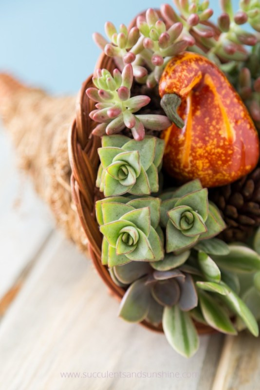 Thanksgiving Centerpiece Succulents And Sunshine Remodelaholic