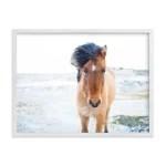 Modern Country Horse Print