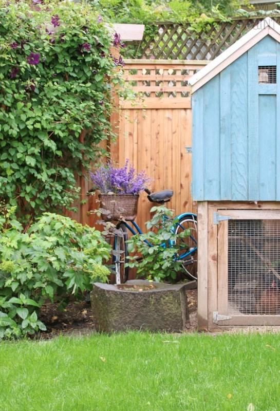 Vintage Schwinn With Lavencer And Blue Chicken Coop
