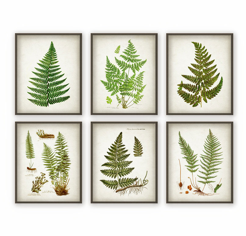 Botanical Artwork
