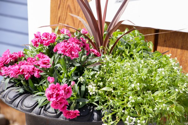 How To Create Beautiful Outdoor Pots And Planters | This Mamas Dance For Remodelaholic 30