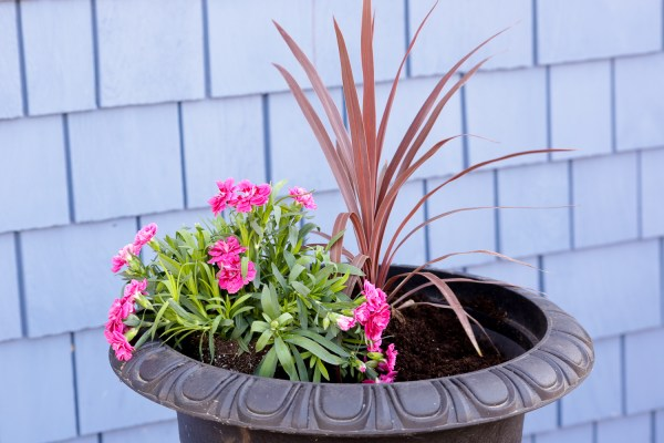 How To Create Beautiful Outdoor Pots And Planters | This Mamas Dance For Remodelaholic 6