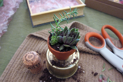 1 inch potted plant