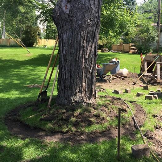 Blog-TreeRing1