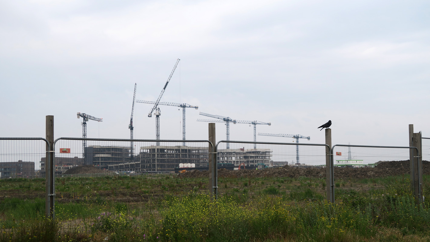 Distance construction with tall cranes, behind a tall wire fence, with a crow perched on top