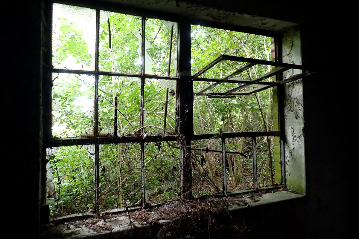 Broken windows looking out on green undergrowth